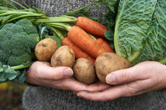 Man Holding Fresh Produce Gathered From The Garden Royalty Free Stock Photo