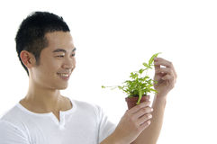 Man holding fresh sprout Stock Photo
