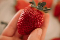 Man holding fresh strawberry close up view. Organic fruit.