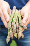 Man Holding Freshly Picked Asparagus Royalty Free Stock Image