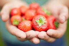 Man Holding Freshly Picked Strawberries Royalty Free Stock Photography
