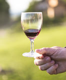 Man holding a glass. Of wine Stock Image