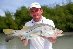 Man holding a good size Snook. A man holding a Snook fish caught with lure, somewhere on the flats of Belize next too a mangrove Stock Photography