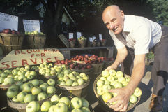 Man holding green apples Royalty Free Stock Photography