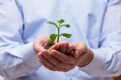 The man holding green seedling isolated on white Royalty Free Stock Photography