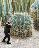 Man holding hammer with cactus Stock Photos