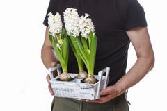Man holding hyacinth flowers Stock Images