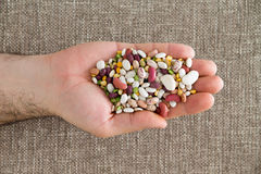 Man holding 15 mixed legumes in his hand Royalty Free Stock Images