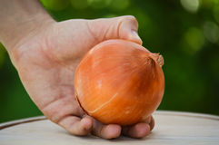 Man holding an onion. In his hand outside Stock Photography