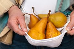 Man holding pears Royalty Free Stock Images