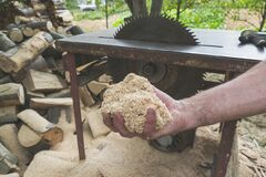 Man holding pile of fresh sawdust in his hand, with chopped wood and circular table saw in the background. Close up of wood