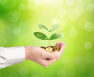 Man holding plant sprouting from a handful of coins Royalty Free Stock Photo