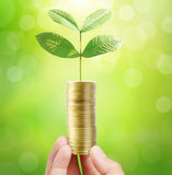 Man holding plant sprouting from a handful of coins Royalty Free Stock Photos