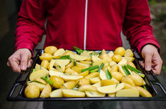 Man holding potatoes Royalty Free Stock Images