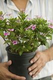 Man Holding Potted Plant mid section close up Stock Photo