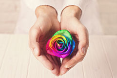 Man holding rainbow rose in heart shaped hands. Valentine`s postcard. Stock Photo