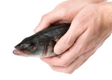 Man holding a raw fish Royalty Free Stock Photography