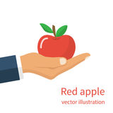 Man holding  red apple Royalty Free Stock Photography