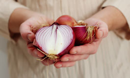 Man holding red onion Royalty Free Stock Image