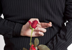 Man holding red rose and fingers crossed Stock Photos