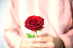 Man holding red rose. Man giving a red rose as gift Royalty Free Stock Images