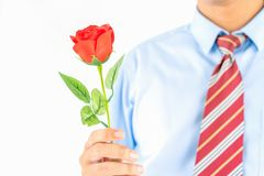 Man holding red rose in hand on white royalty free stock photo