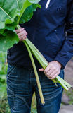Man holding rhubarb Royalty Free Stock Photo