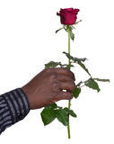 Man holding a rose Royalty Free Stock Photography