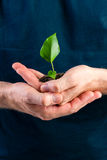 Man holding seedling in his hands Stock Photos
