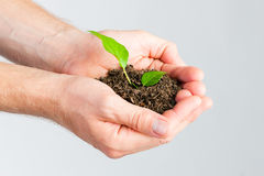 Man holding seedling in his hands Stock Photography
