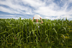 Man holding sign in Corn Field Royalty Free Stock Photos