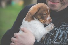 Man holding small dog stock photography