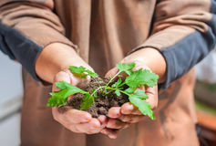 Man holding a small green plant Stock Photo
