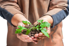 Man holding a small green plant isolated Stock Photography