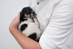 Man holding a small puppy in his hands. He has find new friend Stock Photography
