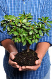 Man Holding Small Tree Stock Images