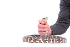 Man holding snake Royalty Free Stock Photos