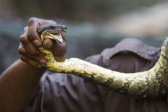 Man holding a snake in hand. Stock Photo