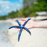 Man holding starfish on perfect tropical white sand beach Royalty Free Stock Images