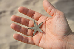 Man holding starfish Stock Image