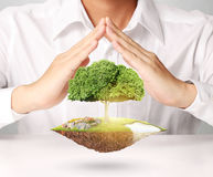 Man holding tree sprouting Stock Images