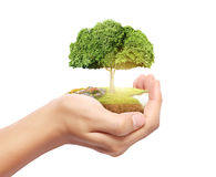 Man holding tree sprouting Stock Image