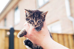 Man holding up a tiny grey kitten in his hand Stock Images