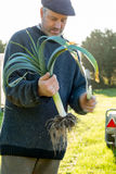 Man Holding an Uprooted Leek Plant Royalty Free Stock Photography
