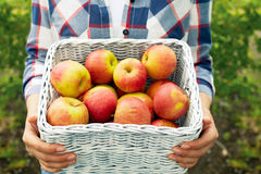 Man holding a wicker basket of ripe apples stock photos