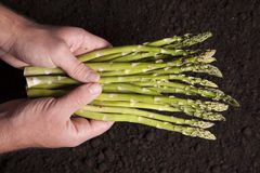 Man Holds Asparagus Royalty Free Stock Photos