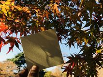 Man holds a blank white paper with beautiful red and orange maple leaves Royalty Free Stock Image