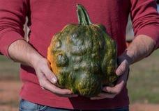 Man Holds Bumpy Green Pumpkin. At waist Royalty Free Stock Image
