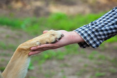 A man holds a dog`s paw in his hand. The concept of friendship and love for animals Stock Photos