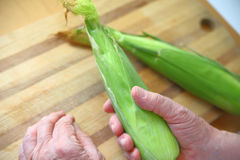 Man holds ear of corn over cutting board Royalty Free Stock Photo